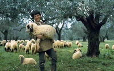 Верното овчарче