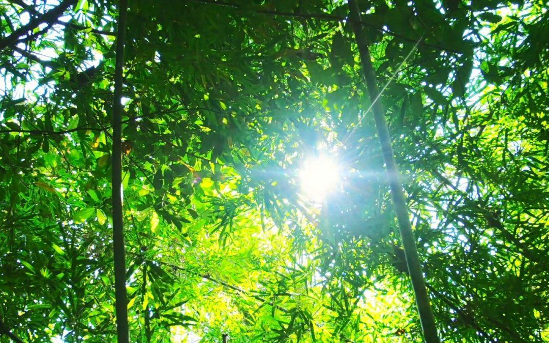 НОВ ПОЧЕТОК – Осум природни лекари: [4] Сончева светлина
