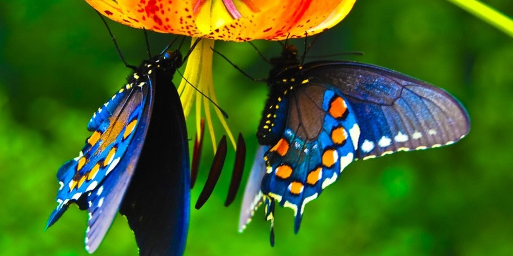 Lower Animal Beautiful Nature Butterfly Wild Animals Images Hd Free Download